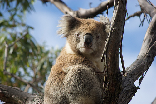 Koala D: Checking You Out, Zoom